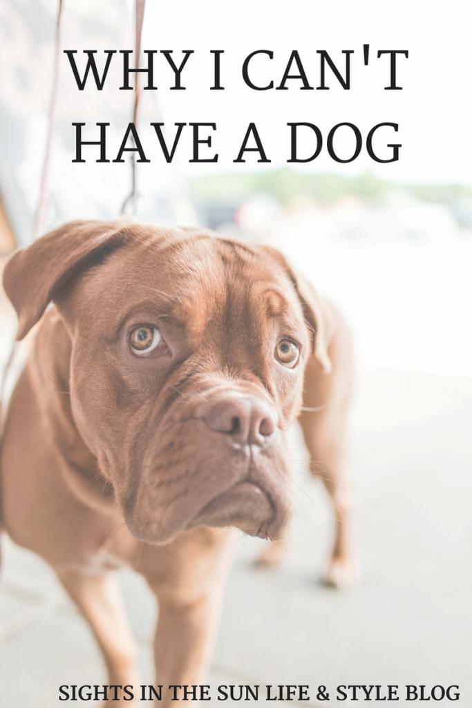 WHY I WON'T LET MYSELF GET A DOG